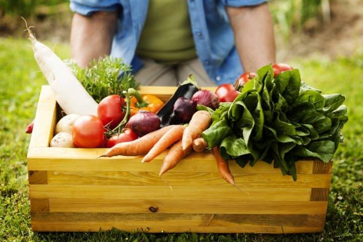 organic gardening gifts